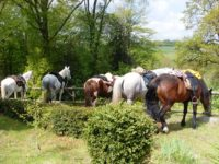 paarden-aan-hek-velotte